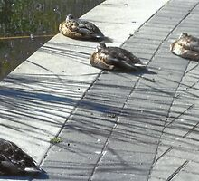 Sitting Ducks by RobynLee