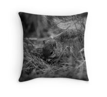 Foraging Squirrel Throw Pillow