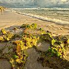 Moss on the Rocks by Daniel Carr