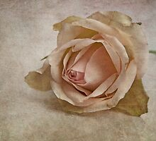 la vie en rose II by lucyliu