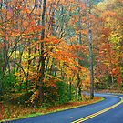 LITTLE RIVER ROAD,AUTUMN 2012 by Chuck Wickham