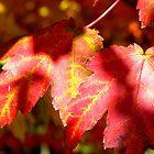 Shadows on Red Leaves by Tisha Clinkenbeard