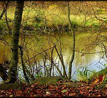 River running © by Dawn M. Becker