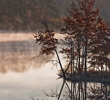 Morning, Jordan Lake, NC by Denise Worden