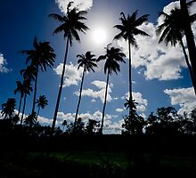 Silhouetted palm trees, Vanuatu, South Pacific Ocean by Sharpeyeimages