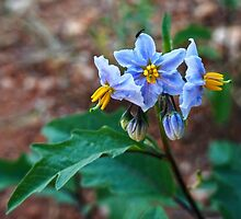 Little blue flower by Wendy  Rauw