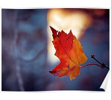 Last leaf on the branch Poster