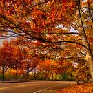 Fall Road,Chestnut Hill, Massachusetts by LudaNayvelt