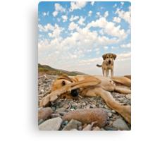 Playful Dogs On The Beach Canvas Print