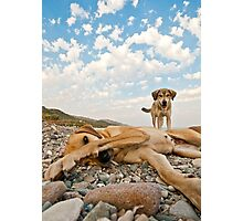 Playful Dogs On The Beach Photographic Print