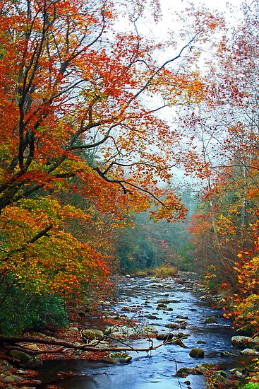 LITTLE RIVER,AUTUMN 2012 by Chuck Wickham