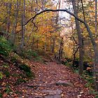 Lovin&#x27; The Leaves On The Lower Falls Trail (as-is) by Gene Walls