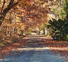 Country Autumn Road by James Brotherton