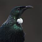Tui Portrait by Robyn Carter