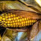 Corn by Nicole W.