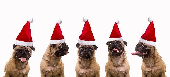 Seasons Greetings Pugs by Edward Fielding