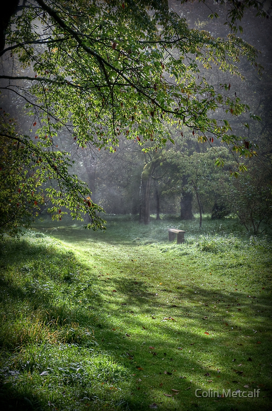 Misty Memories by Colin Metcalf