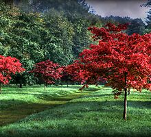 Autumn Avenue by Colin Metcalf