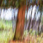 Trees - 28 - Impressions by Yannik Hay