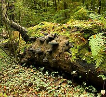Overgrown with mosses and fungi by steppeland