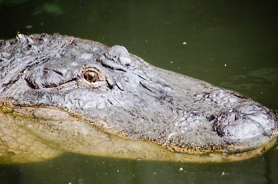 This Gator Likes You by Chuck Coniglio