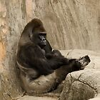 Bored to Death Gorilla  by Chuck Coniglio