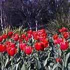 Spring—Royal Tasmanian Botanical Gardens by Brett Rogers