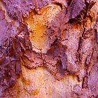 """Bark Abstraction"" by AlexandraZloto"