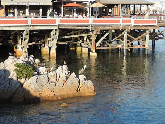 Pelicans at Old Fisherman's Wharf Monterey by Sandra Gray
