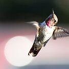 Wondering hummingbird by loiteke