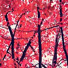 Maple Red by adriangeronimo