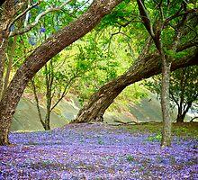 Jacaranda Grove by Renee Hubbard Fine Art Photography