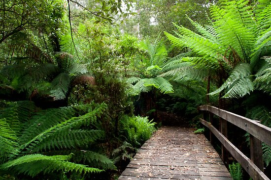 Ferns and Bridge. Henderson Creek. The Otways. by John Sharp