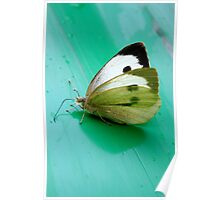 Beauty in a butterfly Poster