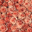 Vintage Roses by Anne Staub