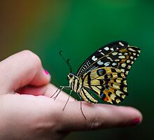 On my finger  by Andrea Rapisarda