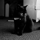 Black Kitten by Mike Taylor