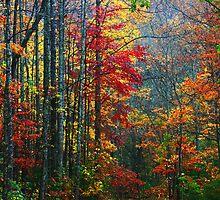FOREST,AUTUMN-TREMONT by Chuck Wickham