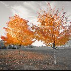 A Touch of Fall by John Davenport