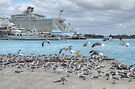 Seagulls at Prince George Wharf in Nassau Harbour, The Bahamas by 242Digital