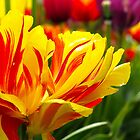 Flower Flame by Rob Atkinson