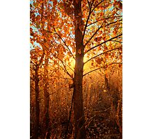 Autumn Lights Photographic Print
