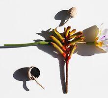 Australian Still Life 2 by papillonphoto