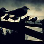 Gulls by davrberts