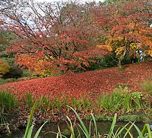 Autumn colours  at  Wakehurst Place by Keith Larby