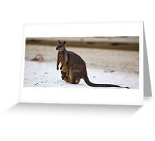 Beach Visitor - Green Patch Beach, NSW Greeting Card