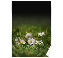 Daisys 01 Poster