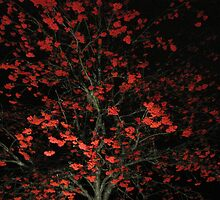 November Rowan Tree by ArtOfE