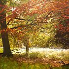 Wonderful Autumn Colours by CJTill