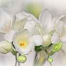 Couple of Freesias... by Bob Daalder